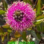 Gabby Quoi Quoi Wildflowers 26-28 September 2020 (1)